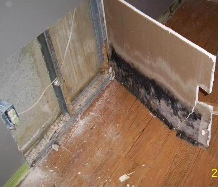 Mold Remediation Done Right--St. Petersburg After