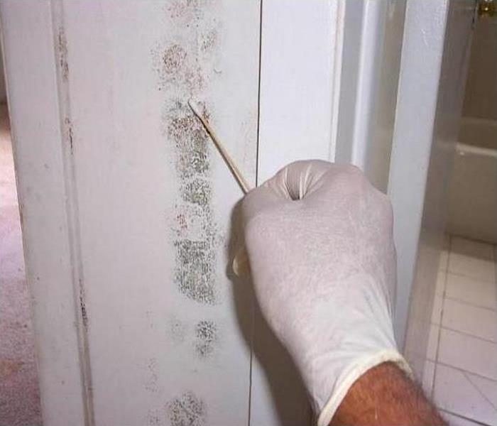 Mold Damage – St. Petersburg Bathroom