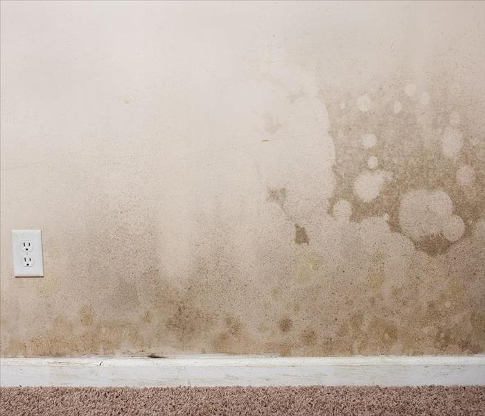 Water Damage Water Damage in St. Petersburg Can Cause Odors and Other Problems