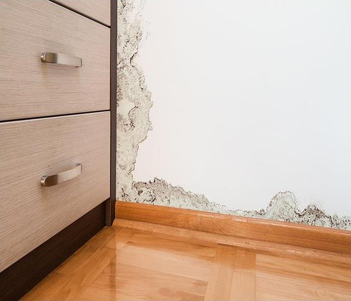 Mold Remediation Mold Damage Technicians In St. Petersburg