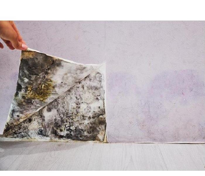Mold Remediation Why Residents Need to Locate the Moisture Source Causing Mold Damage in St. Petersburg Homes