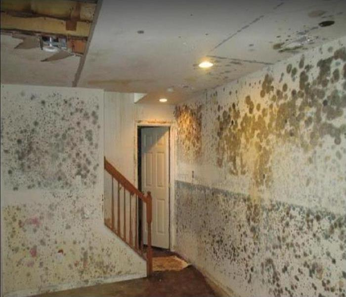 Mold growing on walls and ceiling.