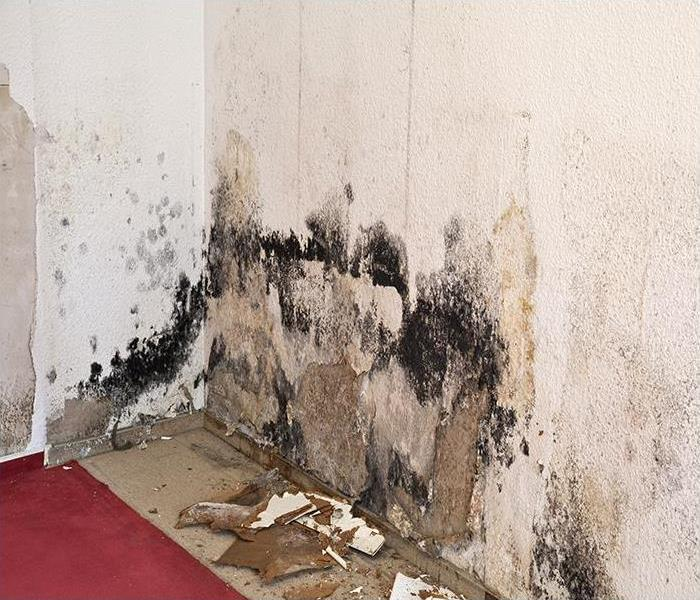 Mold Remediation Removing Mold Damage In Your St. Petersburg Home