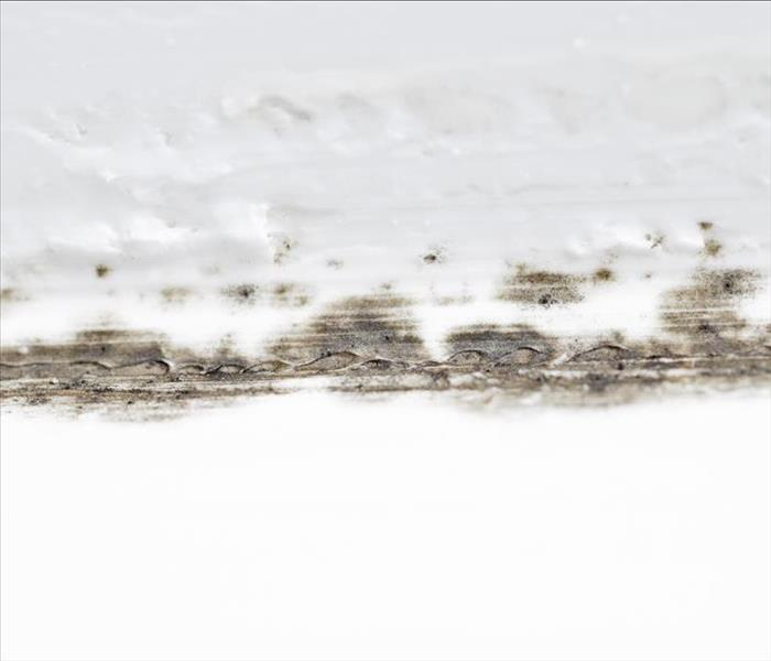 Mold Remediation Do Not Worry About Toxic Black Mold Damage In St Petersburg
