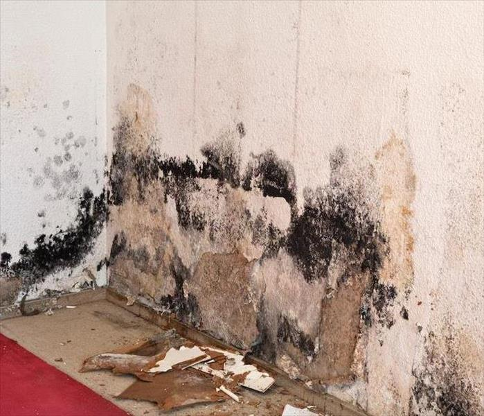Mold Remediation How to Effectively Deal With St. Petersburg Mold Damage