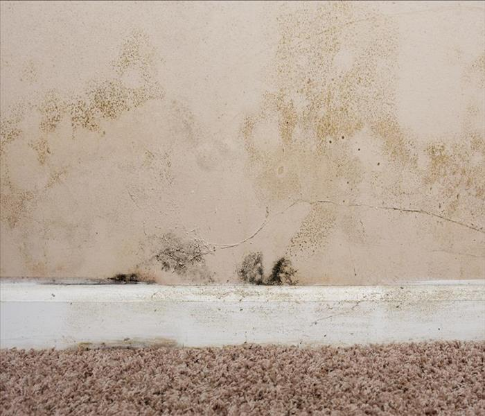 Mold Remediation St. Petersburg Mold Damage and Remedies