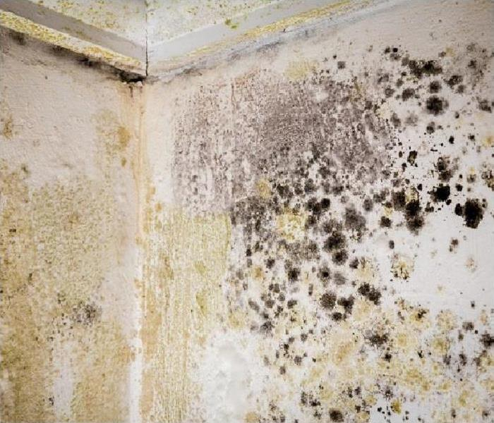 heavy mold growth on walls and ceiling